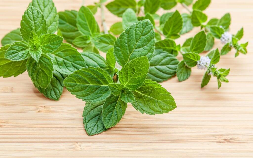 Peppermint Leaves Work Great While You Wait for General Dentistry