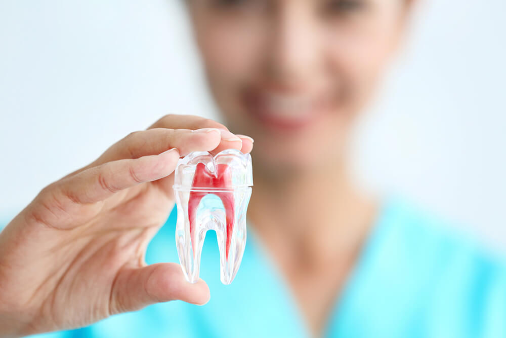 Image of young female dentist holding model of a tooth